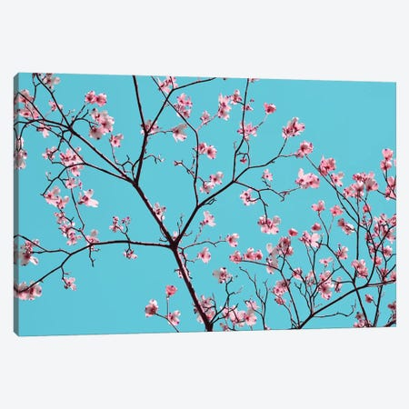 Petals & Sky IV Canvas Print #LER43} by Sharon Chandler Canvas Art