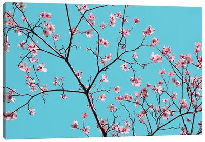Petals & Sky IV Canvas Art Print