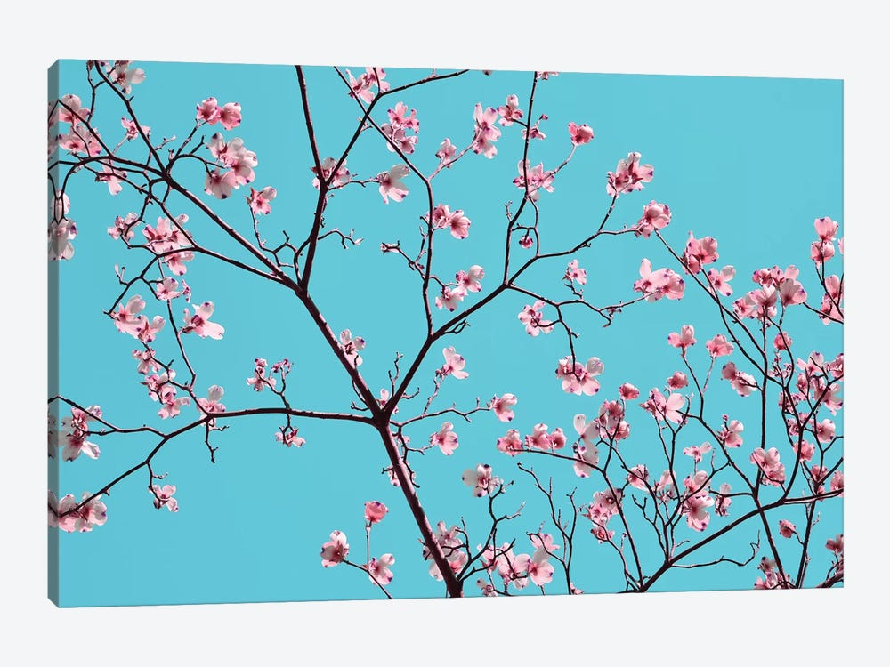 Petals & Sky IV by Sharon Chandler 1-piece Canvas Print