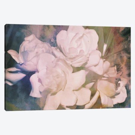 Blush Gardenia Beauty I 3-Piece Canvas #LER82} by Sharon Chandler Canvas Art