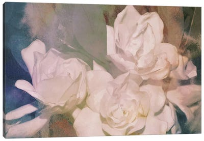 Blush Gardenia Beauty II Canvas Art Print