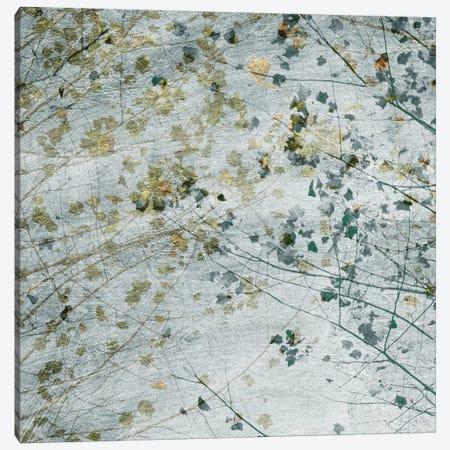 Seasonal Transition II Canvas Print #LER95} by Sharon Chandler Canvas Artwork