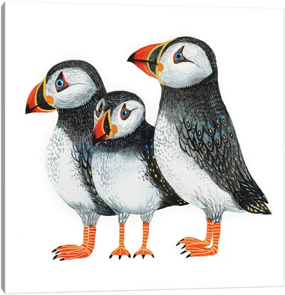 Puffins Canvas Art Print