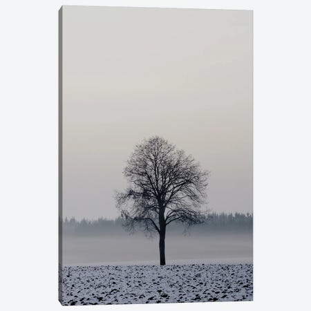 Winter Tree Canvas Print #LEW108} by Lena Weisbek Canvas Art Print