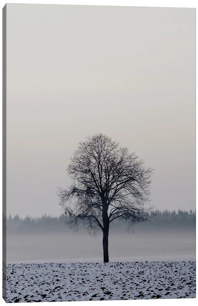 Winter Tree Canvas Art Print