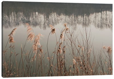 Between Reed And Water Canvas Art Print