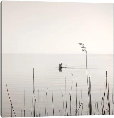Diving Swan Canvas Art Print