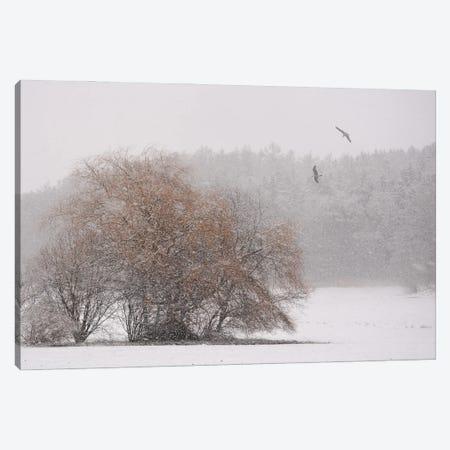 Winter Symphony Canvas Print #LEW125} by Lena Weisbek Canvas Artwork