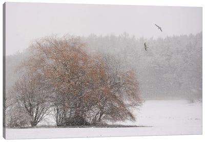 Winter Symphony Canvas Art Print