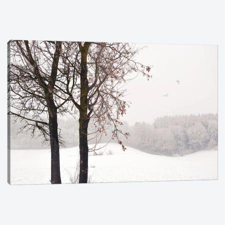 Winter Idyll Canvas Print #LEW126} by Lena Weisbek Canvas Artwork