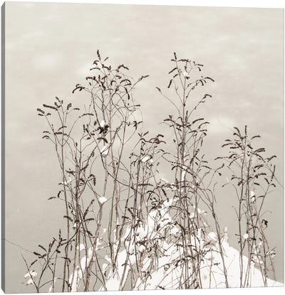 In Unison Canvas Art Print