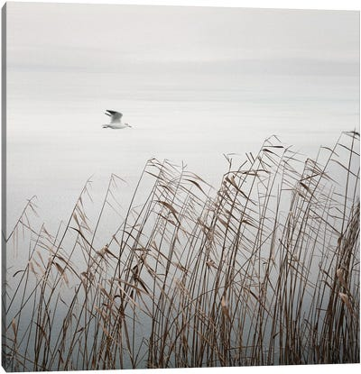 Bird On The Lake Canvas Art Print