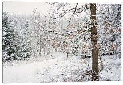 Winter Wood Canvas Art Print