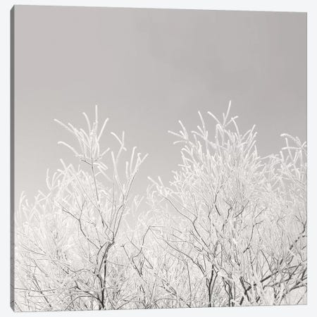 Painted Winter Canvas Print #LEW38} by Lena Weisbek Canvas Wall Art