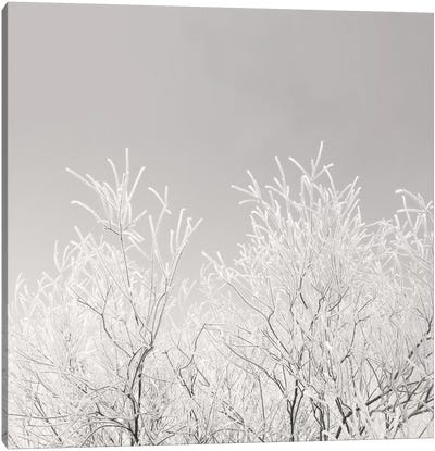 Painted Winter Canvas Art Print
