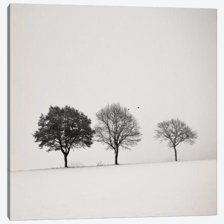 Three Trees Canvas Print #LEW61} by Lena Weisbek Canvas Print