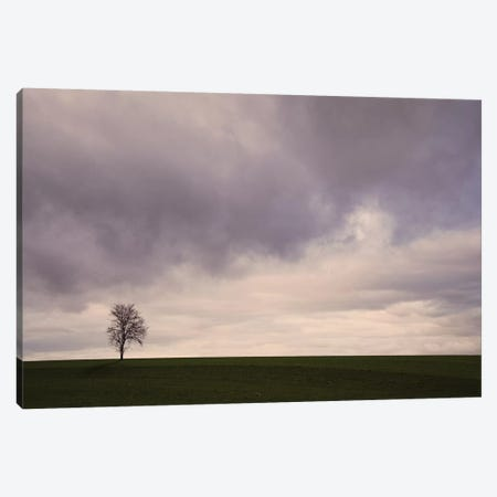 Lonely Tree Canvas Print #LEW80} by Lena Weisbek Canvas Art Print