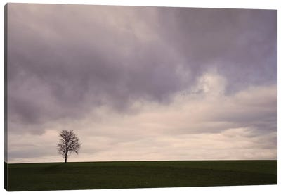 Lonely Tree Canvas Art Print