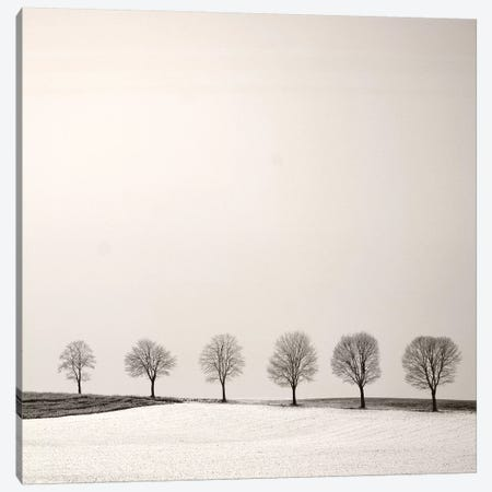 Tree Line Canvas Print #LEW95} by Lena Weisbek Art Print