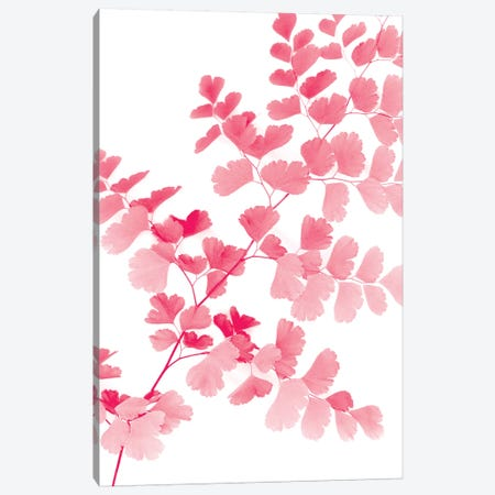 Pink Maidenhair Canvas Print #LEX10} by Lexie Greer Art Print