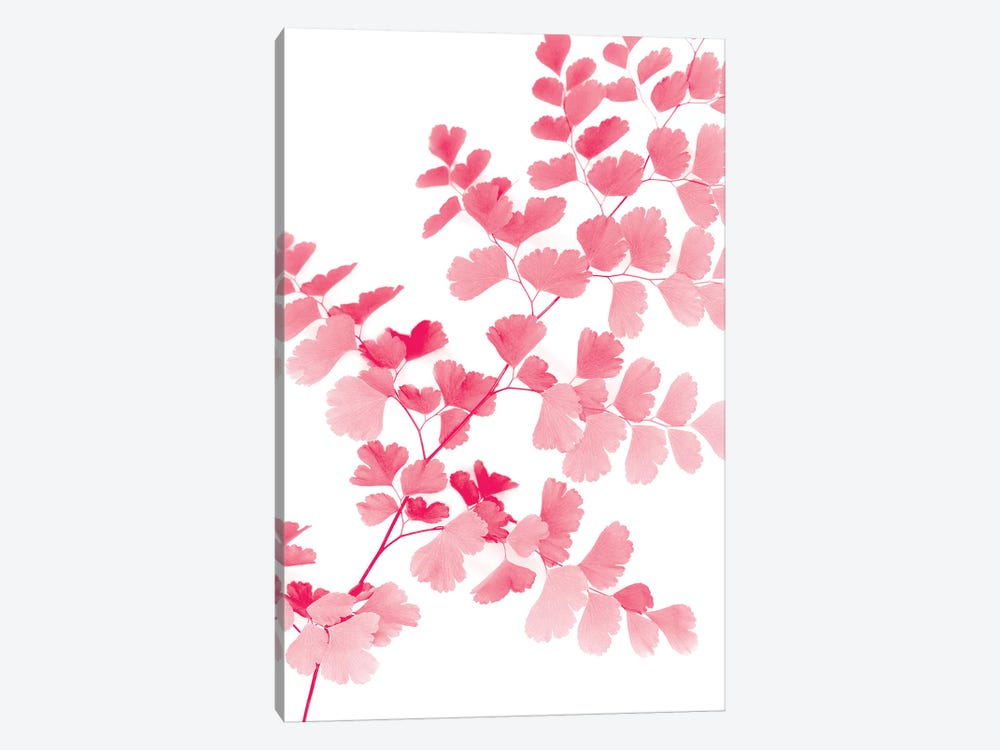 Pink Maidenhair by Lexie Greer 1-piece Art Print