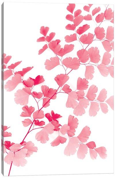 Pink Maidenhair Canvas Art Print
