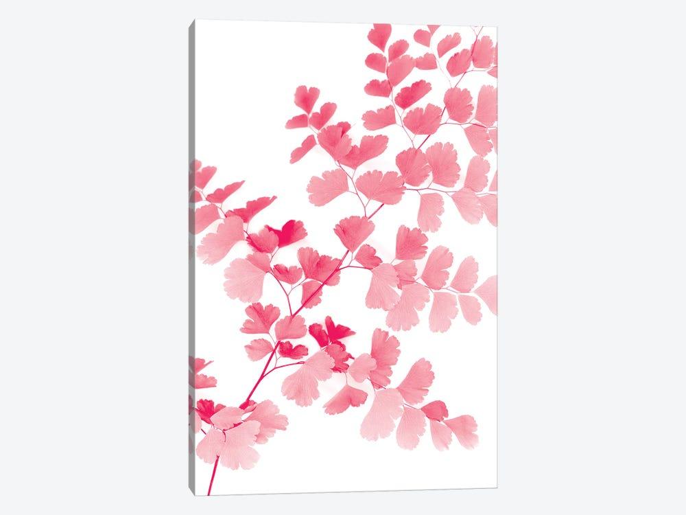 Pink Maidenhair by Lexie Greer 1-piece Art Print