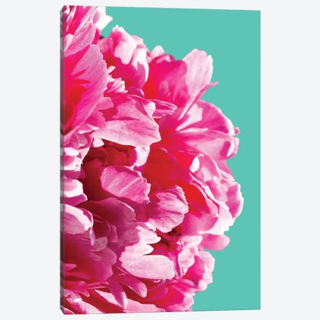 Pink Peony Canvas Print #LEX11} by Lexie Greer Art Print