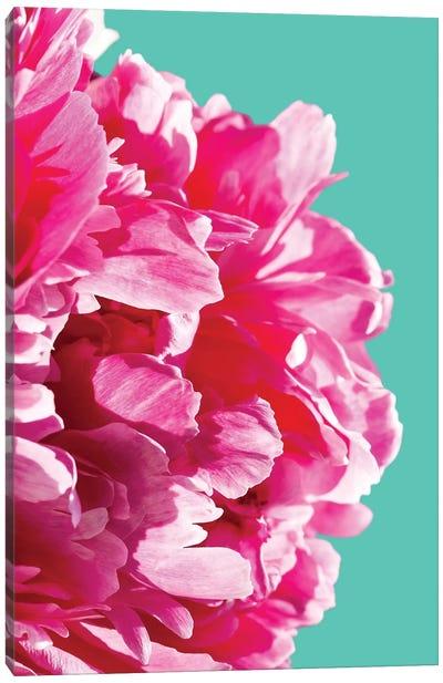 Pink Peony Canvas Print #LEX11