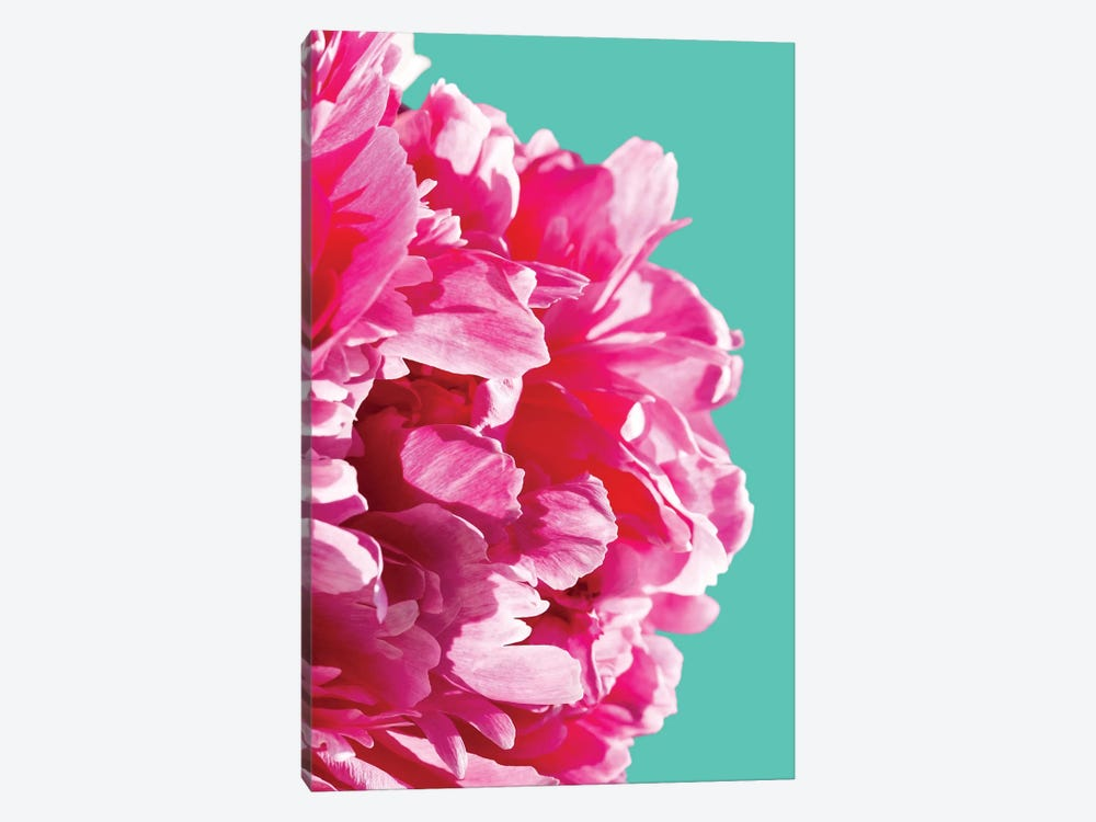 Pink Peony by Lexie Greer 1-piece Canvas Artwork