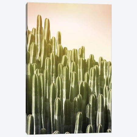 Pink Sky Cactus Canvas Print #LEX12} by Lexie Greer Art Print