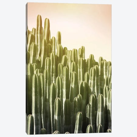 Pink Sky Cactus Canvas Print #LEX12} by Lexie Greer Art Print