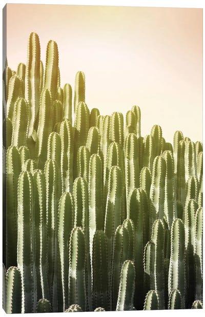 Pink Sky Cactus Canvas Print #LEX12