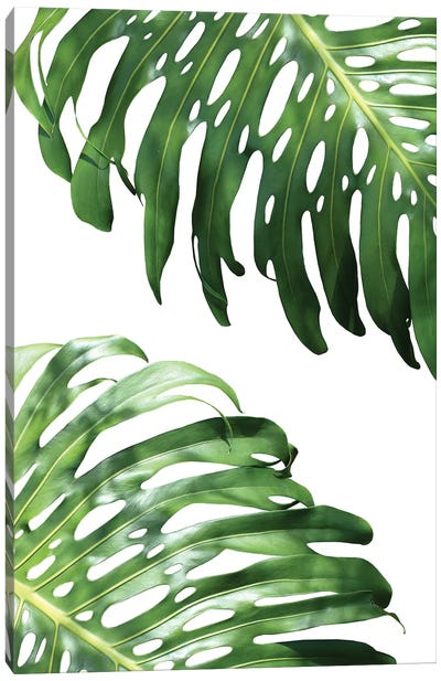 Double Philodendron Canvas Art Print