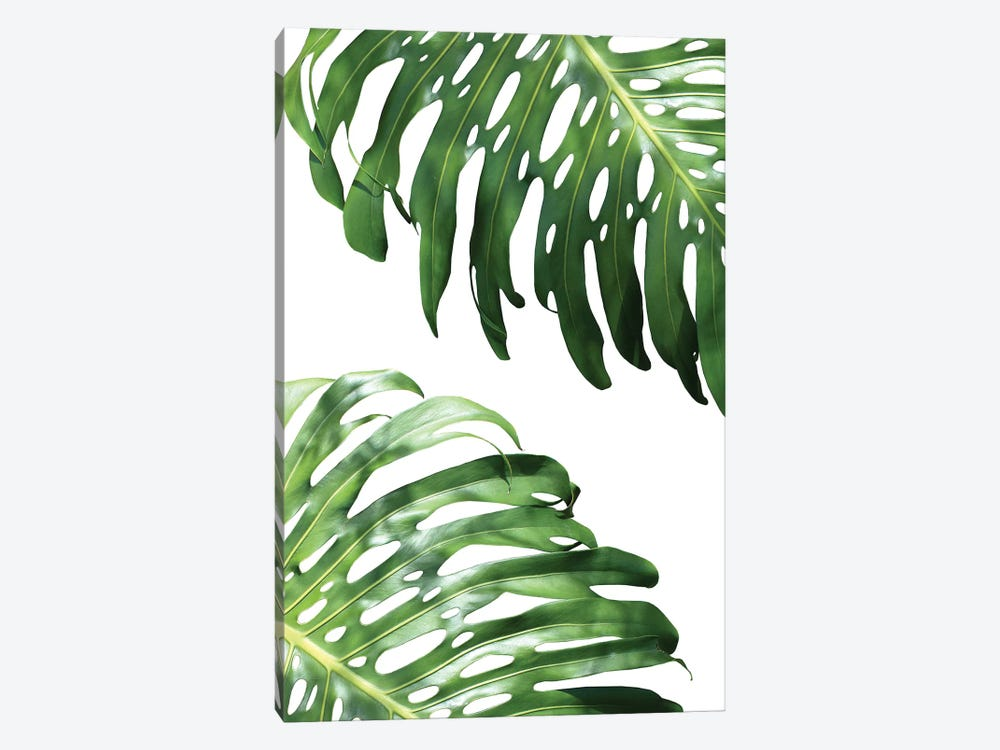 Double Philodendron by Lexie Greer 1-piece Canvas Artwork