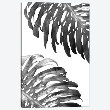 Double Philodendron In B&W Canvas Print #LEX3} by Lexie Greer Canvas Art Print