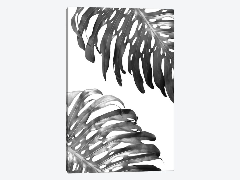 Double Philodendron In B&W by Lexie Greer 1-piece Canvas Art Print