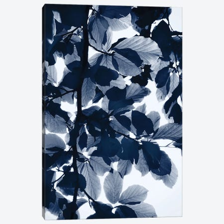 Indigo Leaves Canvas Print #LEX5} by Lexie Greer Canvas Art