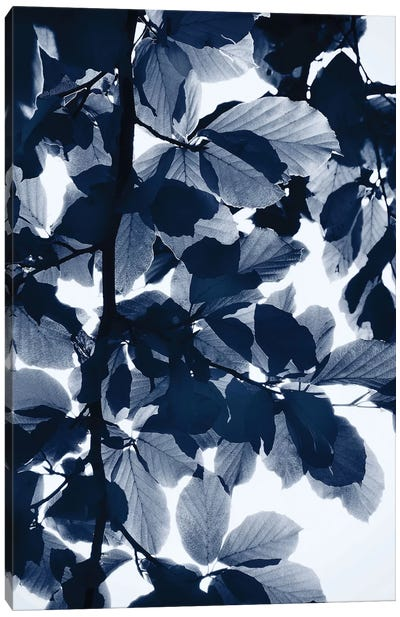 Indigo Leaves Canvas Print #LEX5