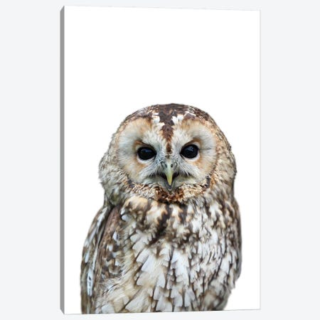 Owl Canvas Print #LEX6} by Lexie Greer Canvas Wall Art