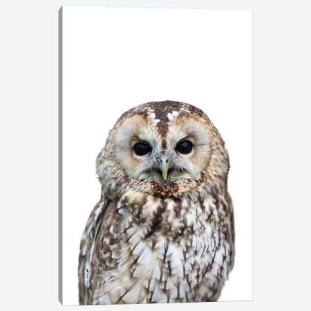 Owl Canvas Print #LEX6} by Lexie Greer Canvas Wall Art