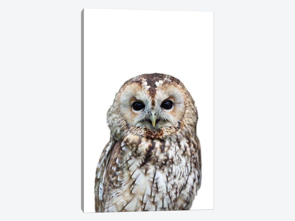 Owl by Lexie Greer 1-piece Canvas Artwork