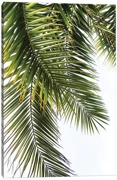 Palm Leaves Canvas Art Print