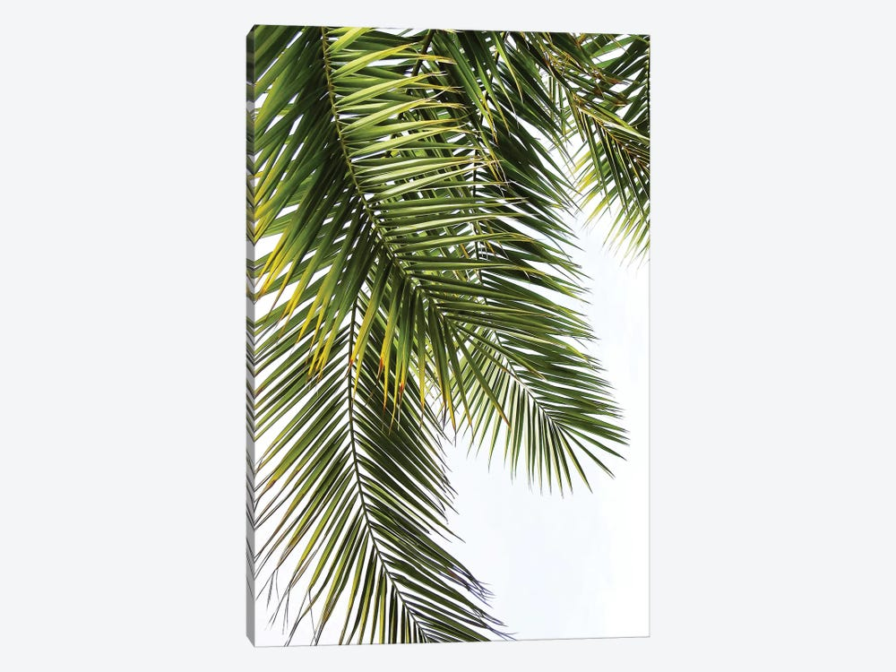 Palm Leaves 1-piece Canvas Art Print