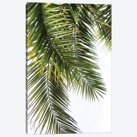 Palm Leaves Canvas Print #LEX7} by Lexie Greer Canvas Art