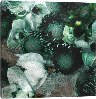 Blossom IV Canvas Art Print