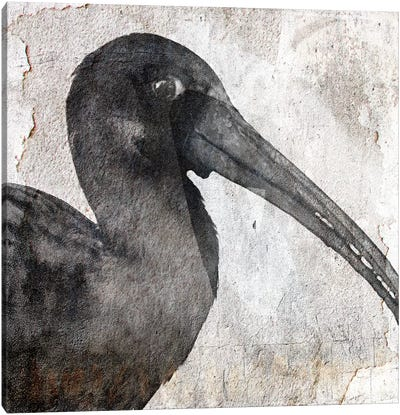 Birdy Canvas Art Print