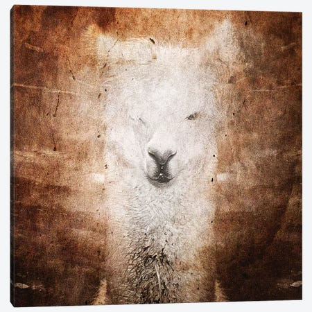 Llama Canvas Print #LFR51} by Linnea Frank Art Print