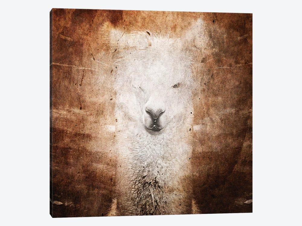 Llama by Linnea Frank 1-piece Canvas Artwork