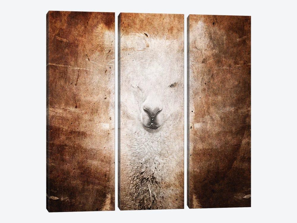 Llama by Linnea Frank 3-piece Canvas Wall Art